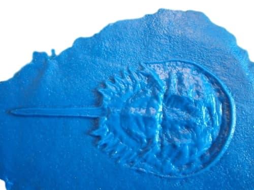 Fossilized-prehistoric-crustacean-crab-accent-concrete-stamp