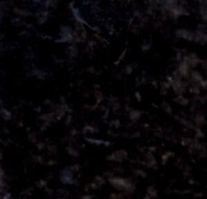 black wb